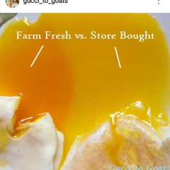 Farm-Fresh-vs-Factory-Farmed-Eggs