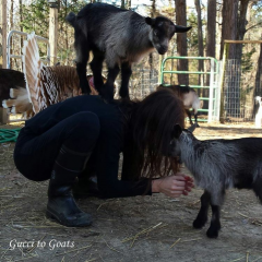Baby goat attack