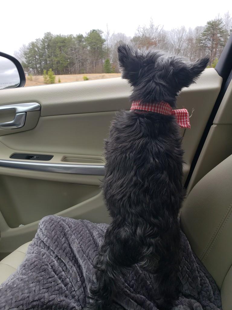 Hui car ride