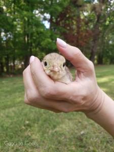 Baby gertie