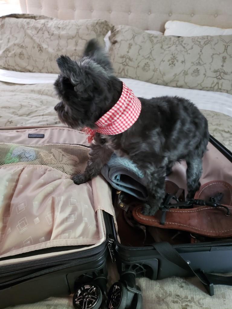 hui travels