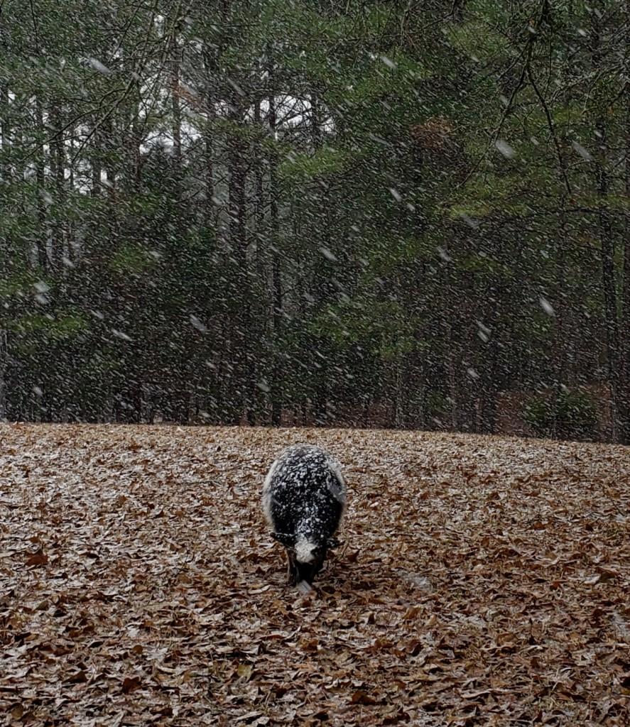 hazel snow