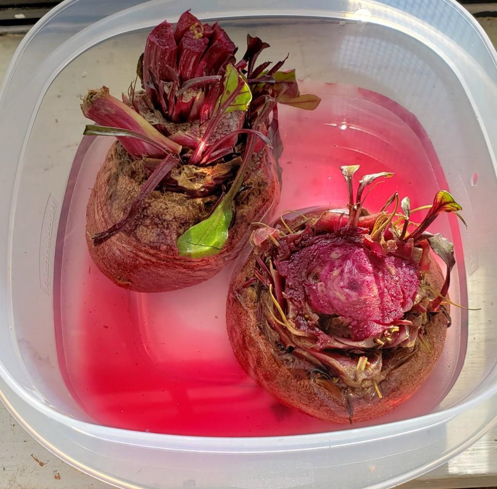 regrow beets